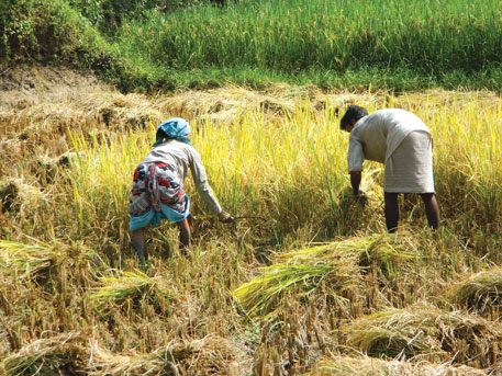 Farmers shrink, labourers swell