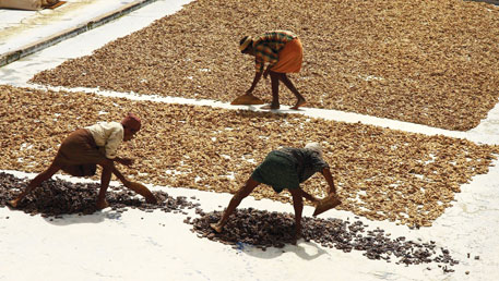 In Karnataka, labour for ginger cultivation is cheap and land is easily available on lease