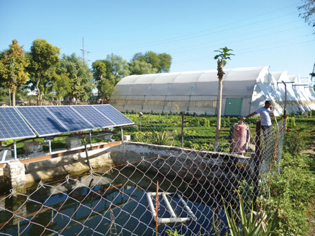 In Rajasthan, solar pumps have been installed in farm ponds (diggis)