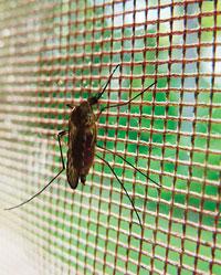 Mosquito matters