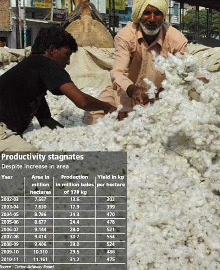 Cotton saga unravels