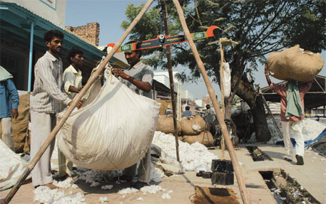 Farmers shun cotton