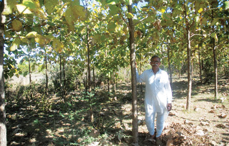 Rambharos Kamedia, plantation farmer in Madhya Pradesh, has failed to harvest a single crop of teak since the government amended Lok Vaniki scheme in 200