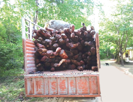 Red Sandalwood seized by a special task force in Andhra Pradesh