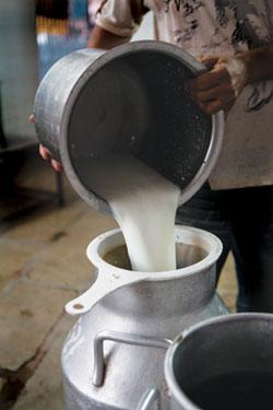 winner dairy pondicherry