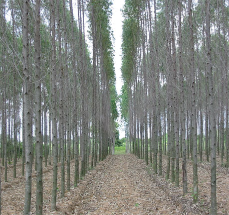 Paper mills that have invested in farm forestry have registered better growth than the ones that have not
