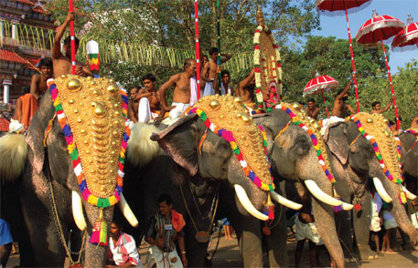 24 captive elephants died in Kerala in 2014; most of them were tortured