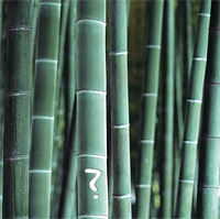 Is bamboo a tree or a grass?