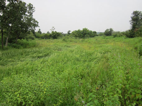Lush Green grassland inside the project site.