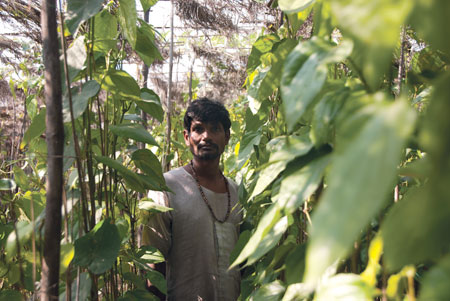 Paan loses flavour
