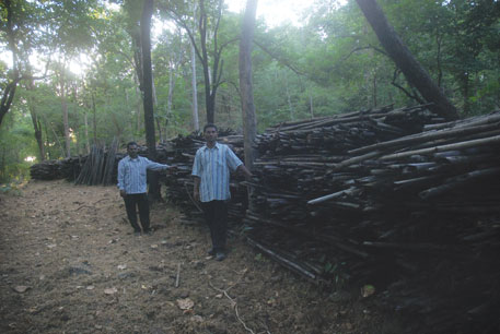 People of Marda seized the bamboo harvested by paper mill Ballarpur Industries