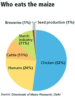 Maize production in south africa 2015