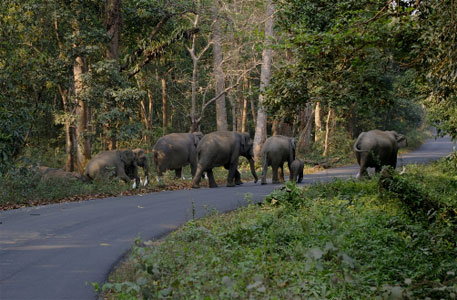 By the highway in Jalpaiguri district, one can spot shrines of Mahakal baba. The reverence among locals have diminished as elephant raids became more frequent. Once calm giants, they are now much feared for their proverbial aggression (Photo: Ramnath Ray)