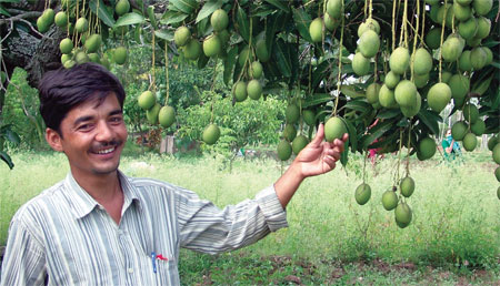 Mangoes lost 150 years ago