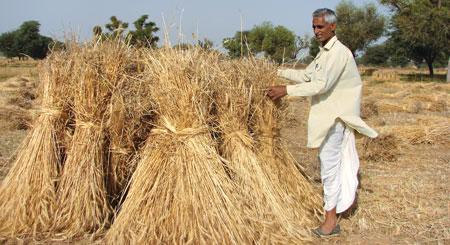 Upturned harvest