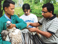Drug ban saves vultures