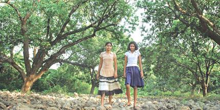 Mango tree insurance