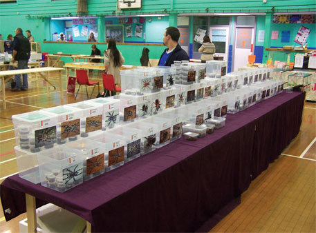 Tarantula World, a Boston-based breeder and supplier of tarantulas, organised a show in 2012 to sell the spiders as pets