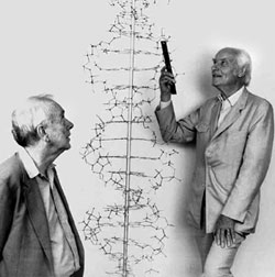 James Watson (left) and Francis Crick recreate the double helix model for DNA in 1990