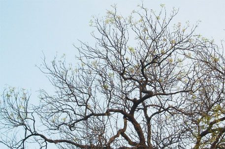 Autumn for neem