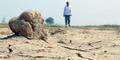 Khap panchayat bans paddy
