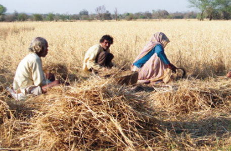 Unseasonal rains damage crops estimated to be worth Rs 10,000 crore