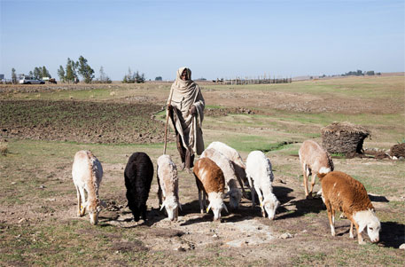 Pastoralism beneficial to humanity, says UN study