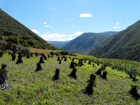 How climate change impacted ancient Tibetan civilization