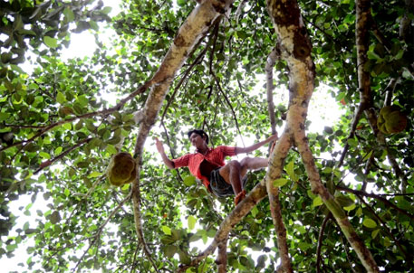 A young Dongria Kondh boy from Kesarpadi village swings across the tree to check if the jackfruits are ripe enough