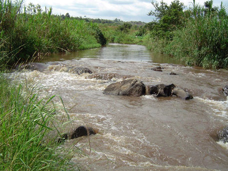 River Malaba shared by Kenya and Uganda is choking on plastics and animal waste