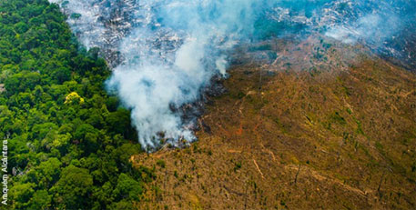 Amazon deforestation up by 190 per cent