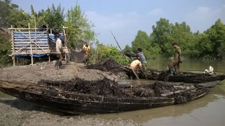 Sundarbans oil spill: who will clean the mess?