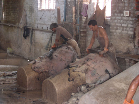 Tannery workers in Kanpur risk DNA damage