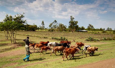 Health of humans, livestock interlinked in Africa