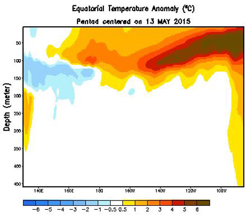 Depth of warm water (shaded yellow/orange/red) in the equatorial pacific ocean as on 13th May 2015. (Courtesy- CPC)
