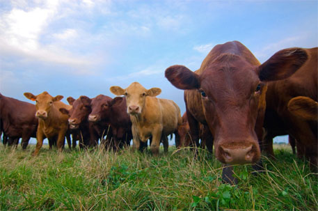 US move to curb antibiotic resistance not enough to address use of drugs in animals