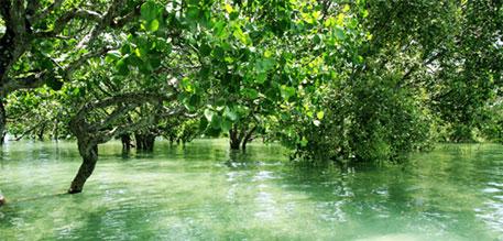 Innovation key to meet Aichi biodiversity targets by 2020