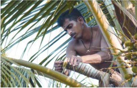 Coconut Development Board to market neera as health drink