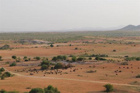 Common pastureland in Karnataka diverted for development: report