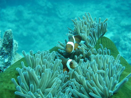 The Philippines, Australia partner to study ecosystem services of coral reefs, mangroves