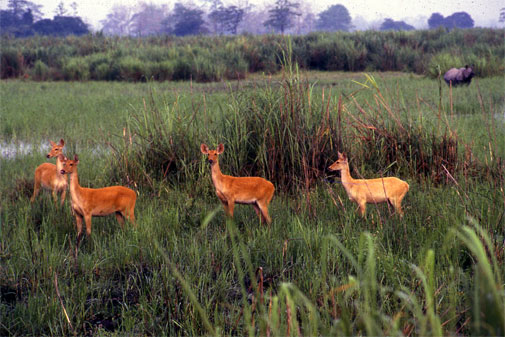 Quandaries along a journey on wildlife conservation