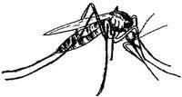 Rare dengue strain resurfaces in Maharashtra after 30 years