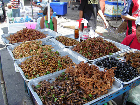 Eat bugs, fight hunger and malnutrition
