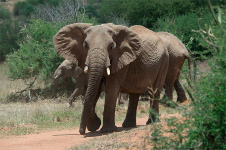 David Attenborough solicits people's support to save African elephants, rhinos from extinction