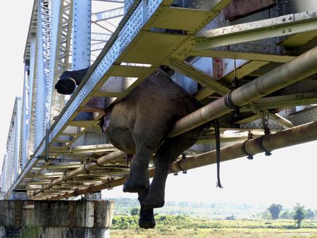 Speeding train kills six elephants in West Bengal