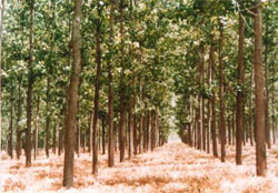 Commercial harvest of degraded forests on cards?