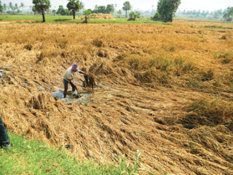 FAO quantifies impact of natural disasters on agriculture