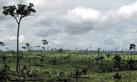 Bolivia losing forest cover at alarming rate