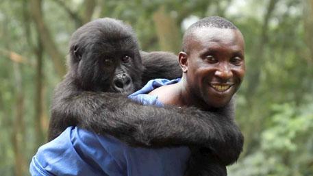 Attenborough film calls for saving gorillas of Congo's Virunga