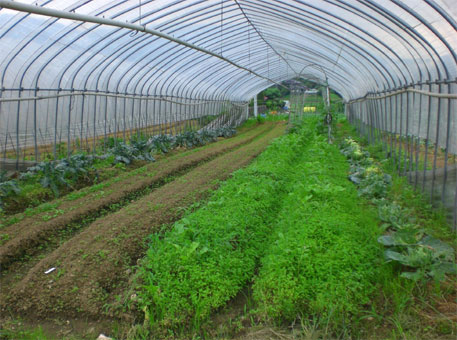 Japan uses technology to help farmers tackle changing weather